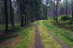 Stolowe Mountains in Poland. Road in forest of Table Mountains in Sudetes near Karlow village, Poland Stock Photography
