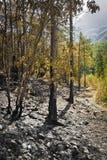 Stolpe-brand i den wood lodlinjen Arkivfoto