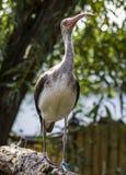 Stolt fågel Royaltyfri Foto