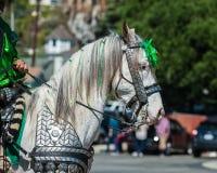 Stolt häst med flätade trådar och likformign Arkivfoton
