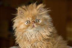 Stolt kattunge arkivbilder