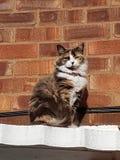 stolt klok katt royaltyfria bilder