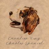 Stolt spaniel för konung charles - handen målade, den isolerade vattenfärghundståenden vektor illustrationer