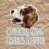 Stolt spaniel för konung charles - handen målade, vattenfärghundståenden vektor illustrationer