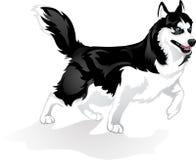 Stolta Huskies Stock Illustrationer