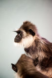 Stolz, ein Säugetier zu sein Lizenzfreie Stockbilder