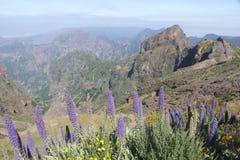 Stolz von Madeira Stockfotografie