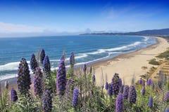 Stolz von Madeira lizenzfreie stockfotos