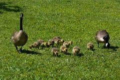 Stolze Muttergesellschaft stockfoto
