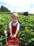 Stolzer Erdbeerepicker Lizenzfreies Stockbild