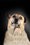 Stolzer Hund Lizenzfreies Stockbild