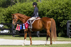 Stolzer Reiter auf ihrem Kastanienpferd Lizenzfreie Stockfotos