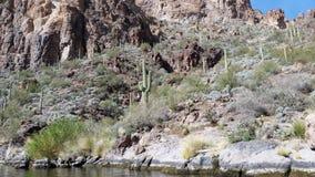 Stolzer Saguaro Stockbild