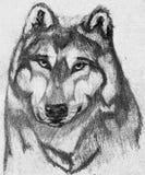 Stolzer Wolf lizenzfreie abbildung