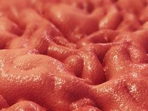 Stomach lining. 3d rendered close up of stomach lining Stock Image