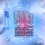 Stomach wall scientific background Royalty Free Stock Photos