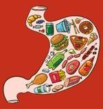 Stomaco degli alimenti a rapida preparazione Fotografie Stock