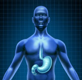 Stomaco e digestione umana illustrazione di stock