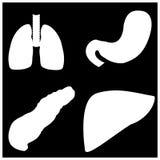 Stomaco, polmoni del pancreas e fegato in bianco e nero Immagine Stock