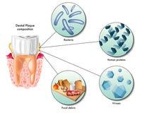 Stomatologiczna plakieta Zdjęcie Royalty Free