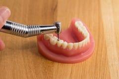 Stomatologiczny higienista demonstruje polerowniczych zęby Fotografia Royalty Free