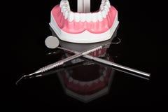 Stomatologiczny model, stomatologiczny narzędzie Zdjęcie Stock