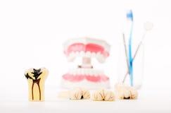 Stomatologiczny model, zęby modeluje, stomatologiczny narzędzie Obraz Stock