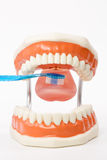 Stomatologiczny model, zęby modeluje, stomatologiczny narzędzie Obraz Royalty Free