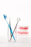 Stomatologiczny model, zęby modeluje, stomatologiczny narzędzie Zdjęcia Royalty Free