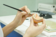 Stomatology technician preparing prosthesis Stock Photography