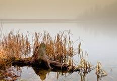 Stomp in het meer Royalty-vrije Stock Afbeeldingen