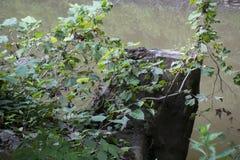 Stomp met bladeren en water stock afbeeldingen