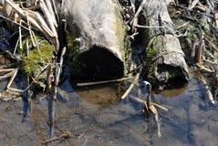 Stomp van de besnoeiings de droge die boom met droog riet wordt behandeld en mos die langs kreek leggen royalty-vrije stock afbeelding