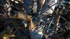Stomp van een boom in het omheiningsnetwerk stock videobeelden