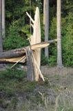 Stomp/stomp van een gebroken nette boom in een bos na een onweer Stock Afbeelding