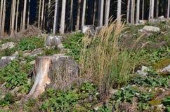 Stomp van een oude felled boom, Zuid-Bohemen royalty-vrije stock fotografie