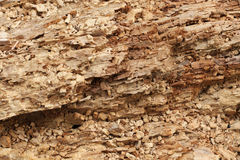 Stomp van rot hout Royalty-vrije Stock Afbeelding