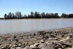 Stompen in Fraser River royalty-vrije stock afbeelding