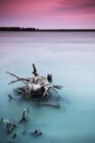 Stompen in het water bij zonsondergang met lange blootstelling Royalty-vrije Stock Foto