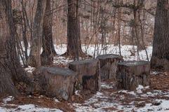 Stompen tussen bomen royalty-vrije stock fotografie