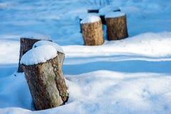 Stompenhoeden met witte sneeuw worden behandeld die Royalty-vrije Stock Afbeeldingen