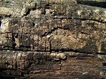 Stomptextuur Oude gebarsten raadsachtergrond Houten textuur Houten omheiningsachtergrond Stompachtergrond Stock Afbeeldingen