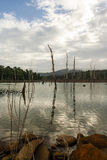 从Ston艾兰-苏里南看见的Brokopondostuwmeer水库 免版税库存照片