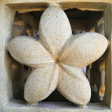 Ston цветка Стоковые Изображения RF