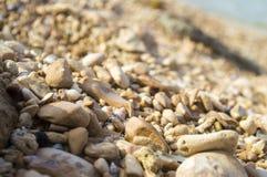 Stone και θαλασσινό κοχύλι Στοκ εικόνες με δικαίωμα ελεύθερης χρήσης