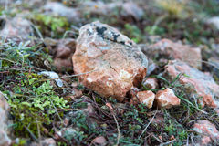 Stone και στενός επάνω χλόης Στοκ Φωτογραφίες