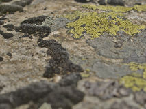 Stone με τη λειχήνα Στοκ φωτογραφία με δικαίωμα ελεύθερης χρήσης