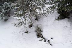 Stone που καλύπτεται με το βρύο και το χιόνι στα βουνά Στοκ εικόνες με δικαίωμα ελεύθερης χρήσης