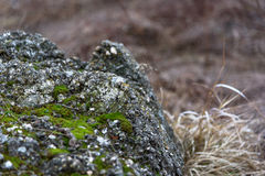 Stone που καλύπτεται από το πράσινο βρύο Στοκ Εικόνα
