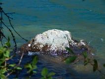 Stone στην παγετώδη λίμνη, στους κλάδους πρώτου πλάνου στοκ φωτογραφίες